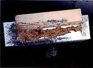 ターマイトバリアフォーム 食害試験写真2