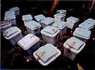 ターマイトバリアフォーム防蟻効力試験写真1